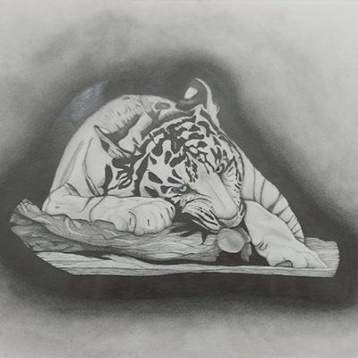 1003-Tiger-pencil-_web