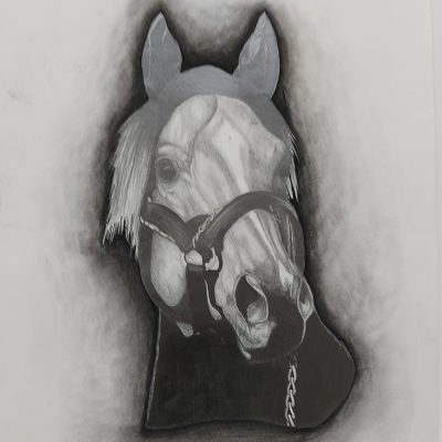 1004-Horse_web
