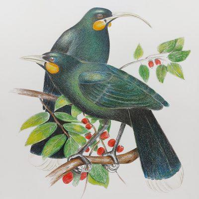 1104-Pair-of-birds_web