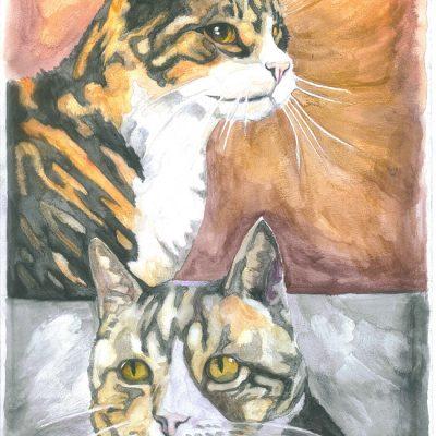 1133---Cats_web